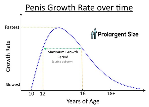AT WHAT AGES DOES PENIS STOP GROWING ?
