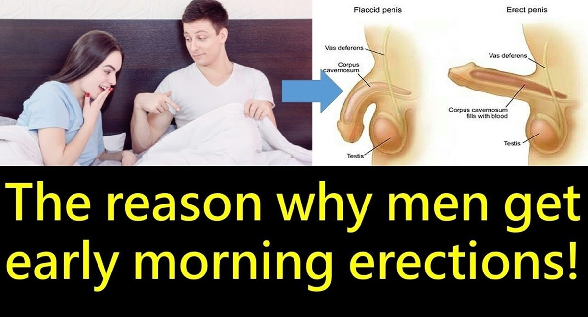 morning erections